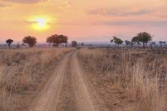 African Savannah. Sunset over the dry African Savannah, Mikumi, Tanzania Royalty Free Stock Photography