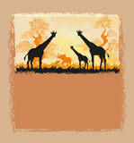African savannah card Stock Image