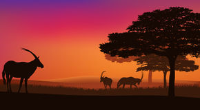 African savannah. With grazing antelopes sunset landscape - wildlife scene vector Royalty Free Stock Photography