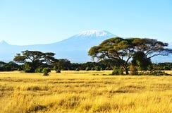 African savannah landscape Royalty Free Stock Image