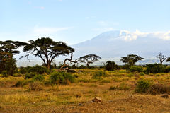 African savannah landscape Stock Photos
