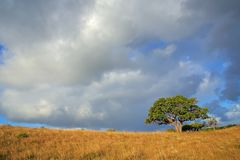 African savannah landscape - South Africa. African savannah landscape with trees in grassland with a cloudy sky, South Africa royalty free stock image
