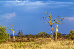 African savannah landscape after the storm, Kruger park, South Africa Royalty Free Stock Photography