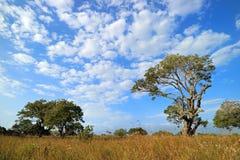 African savannah landscape - South Africa Stock Photos