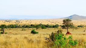 African savannah landscape Stock Photography