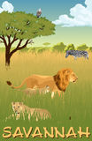 African savannah with lions and zebra - vector illustration Stock Image