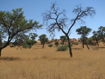 African savannah Royalty Free Stock Photos