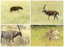 African savannah mammals Stock Images