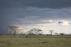 African savannah summer wild safari Tanzania Rwanda Botswana Kenya. African savannah summer pictrures wild safari Tanzania Rwanda Botswana Kenya Stock Photos