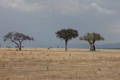 African savannah summer wild safari Tanzania Rwanda Botswana Kenya. African savannah summer pictrures wild safari Tanzania Rwanda Botswana Kenya Royalty Free Stock Images