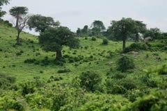 African savannah summer wild safari Tanzania Rwanda Botswana Kenya Stock Images