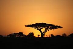 African savannah summer wild safari Tanzania Rwanda Botswana Kenya. African savannah summer pictrures wild safari Tanzania Rwanda Botswana Kenya Royalty Free Stock Photos