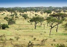 African savannah at sunrise Stock Photos