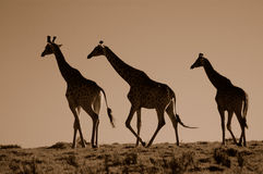 African scene Stock Image