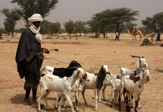 African shepherd. Turkana shepherd of mali, with a flock of goats Royalty Free Stock Photo