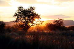 African Sky. The sun setting behind a tree Stock Image