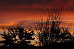 African Sky. Red colours of African dusk with silhouette of tree branches Royalty Free Stock Image