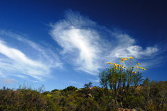 African Sky (Cederberg). Beautiful clouds over Citrusdal (Cederberg Mountains, South Africa Stock Image