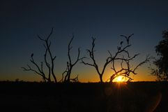 African skyline. Sunset with Maribou sorks in the Kruger National Park, South Africa Royalty Free Stock Photo