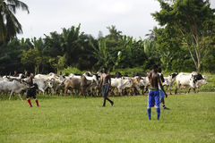 African soccer team during training Royalty Free Stock Photo
