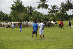 African soccer team during training Royalty Free Stock Images