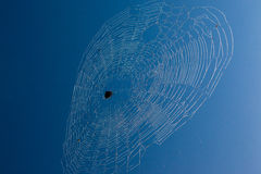 African Spider Web Blue Sky Royalty Free Stock Image