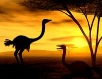 African Spirit - The Ostriches. Illustration of african ostriches, resting vector illustration