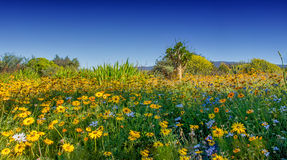African Spring Flowers Stock Image