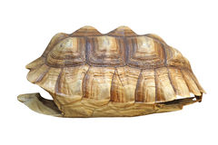 African spurred tortoise or geochelone sulcata shell Stock Photo