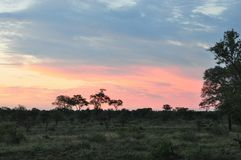 African Sun Set. In the Kruger National Park Royalty Free Stock Images