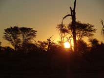 African sundown scenery Stock Photos