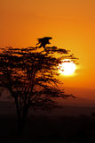 African Sunrise Stock Photos