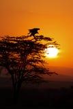 African Sunrise Stock Photos