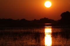 African Sunrise Royalty Free Stock Photo