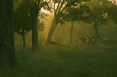 African sunrise. South Luangwa National Park (Zambia) early in the morning Royalty Free Stock Image