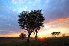 African Sunrise Stock Image