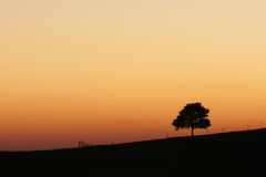 African sunrise with lone tree. The warm colours of an African sunrise, with a single tree in silhouette against the sky Stock Images