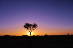 African sunrise. Peaceful sunrise over the African bush Stock Images
