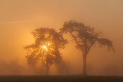 African sunrise Stock Photography
