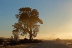 African sunrise with silhouetted tree Stock Image