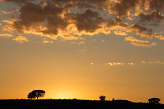 African sunrise with silhouetted trees. And clouds, Kalahari desert, South Africa Stock Images