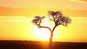 African sunrise time lapse stock video footage