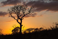 African Sunrise Tree Bush Hillside Stock Photos