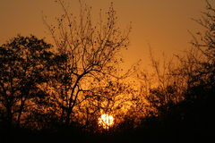 African Sunset. The sun setting in the bushveld stock image