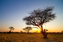African sunset. An african sunset in Hwange National Park Stock Photo