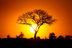 Free African Sunset Royalty Free Stock Image - 20913446