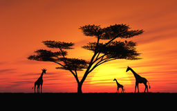 African Sunset stock illustration