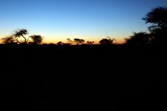 African Sunset. Beautiful african sunset, with acacia tree silhouette Stock Image