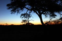 African Sunset. Beautiful african sunset , with acacia tree silhouette Stock Photography