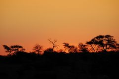 African Sunset. Beautiful african sunset, with acacia tree silhouette Royalty Free Stock Image